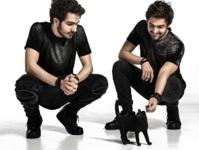 Cat Dealers